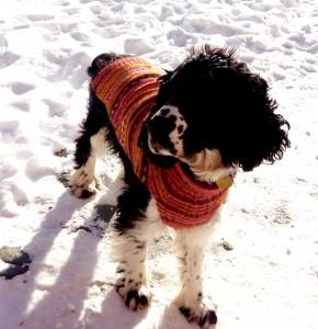 KUSIKUYDogSweater